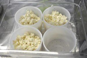 Форма для гауды и твердых сыров 1 кг   узнать стоимость